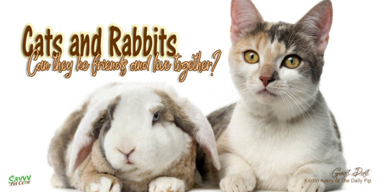 Can Cats and Rabbits Live Together?