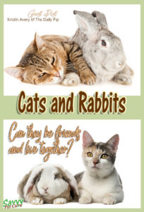 Most cats and rabbits live together peacefully and sometimes even become friends. But some cats are just never going to be OK with rabbits. Cats and dogs are predators by nature, while rabbits are prey. This guest post will help you make the best possible introduction of cats and rabbits.