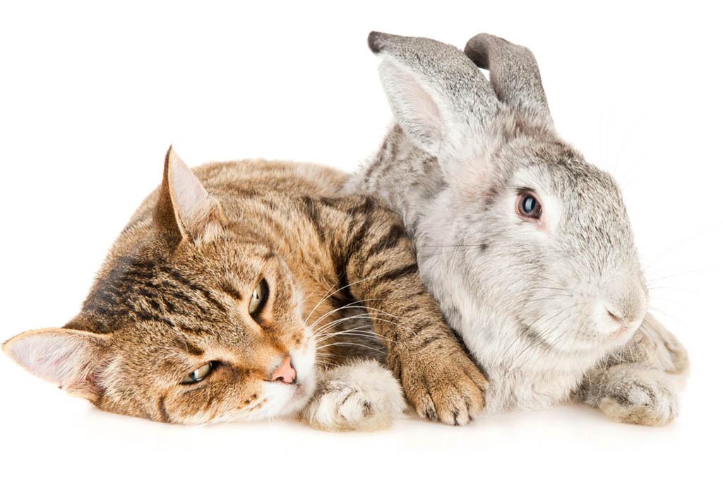 Cats And Rabbits Get Along