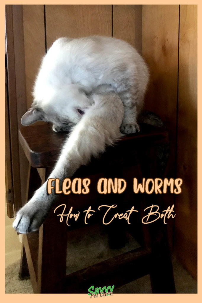 cat chewing at its leg with text overlay: fleas and worms how to treat both