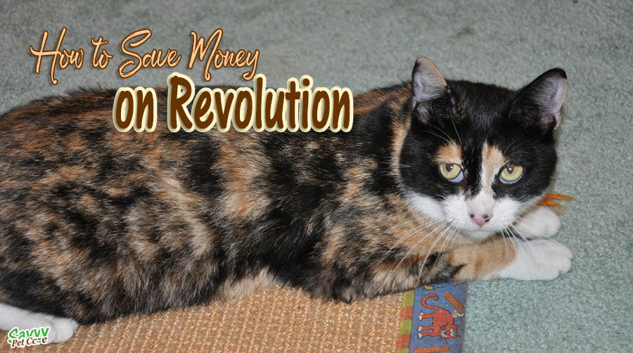 tortoiseshell cat with text overlay: How to save money on Revolution