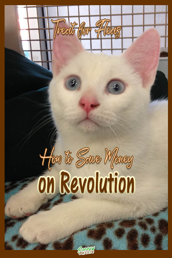 white cat with text overlay: Treat for fleas, How to save money on Revolution