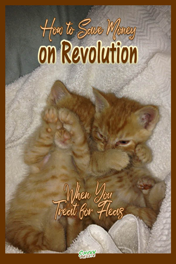 two orange kittens with text overlay: How to save money on Revolution when you treat for fleas