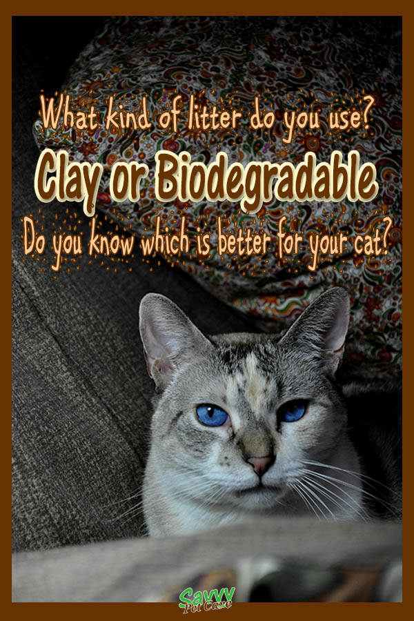 blue-eyed cat with text overlay: What kind of litter do you use? Clay or Biodegradable Do you know which is better for your cat?
