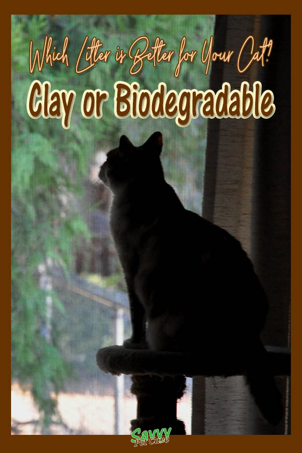 silhouette of a cat looking out a window with text overlay: Which litter is better for your cat? Clay or biodegradable