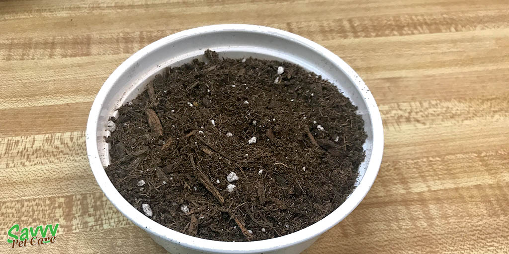 soil and container for growing cat grass