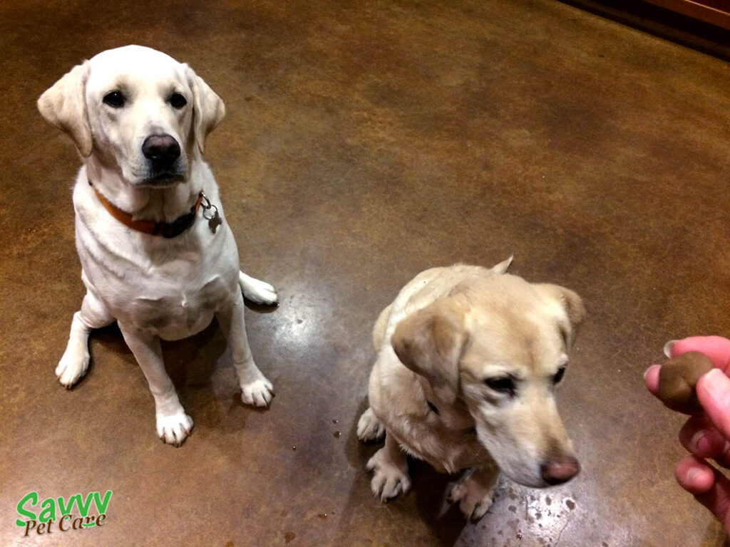 two dogs sitting, waiting for treats