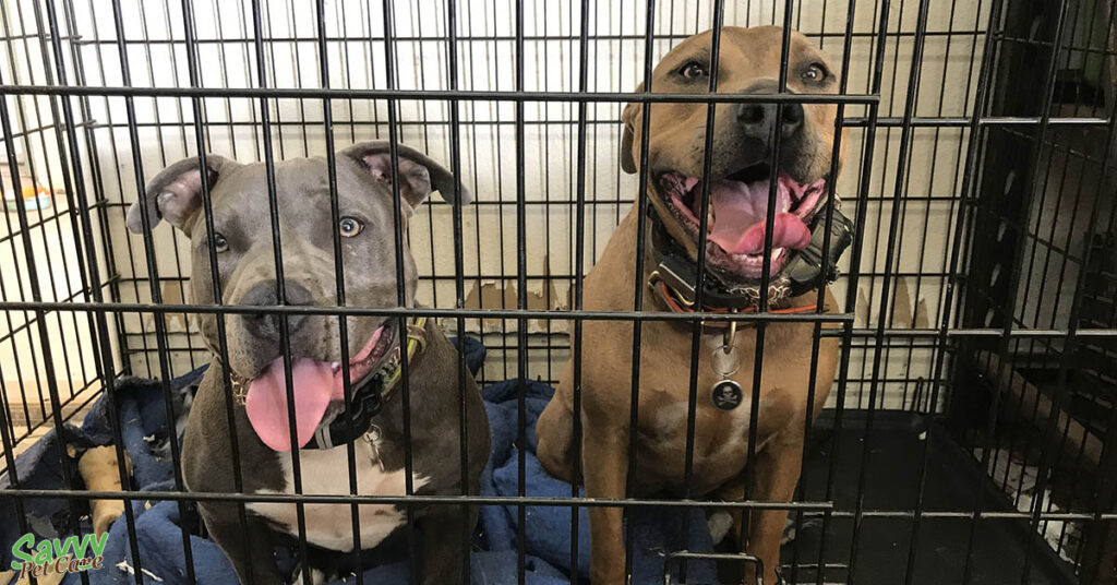 two dogs in their crate